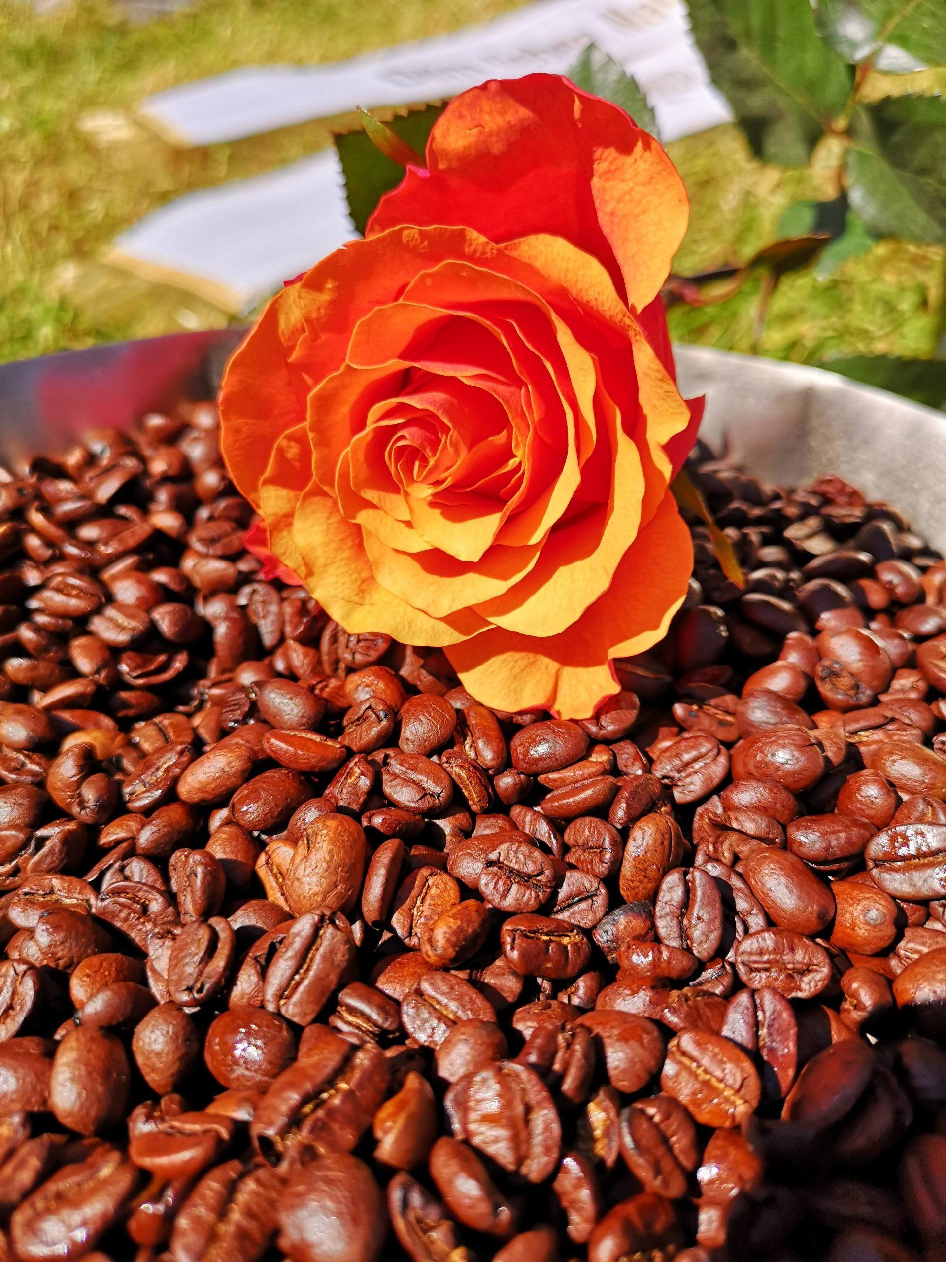 Der letzte Kaffee